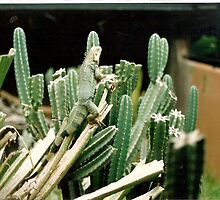 The Lizard Army! Hey Ma! I know how to Camoflarge  Green Cactus! by zoolou
