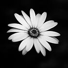 Flower Black and White by Man kit Wong