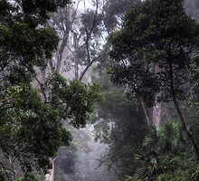 Mt Ousley - Mist by clydeessex