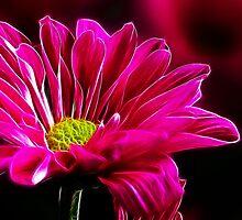 ~ Pink Delight ~ by Brenda Boisvert