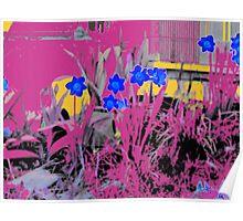 Daffodils Dream Poster