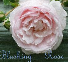 Blushing Rose by Bea Godbee