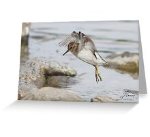 Birdie MATRIX Greeting Card