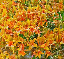 A Splash of Yellows - Kinney Garden © 2010 by Jack McCabe