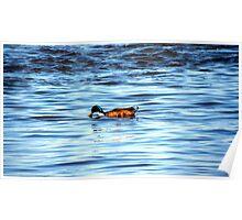 Duck BLUE Poster