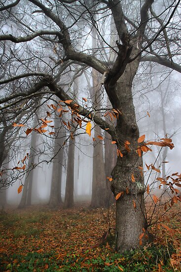 A few scant leaves left by Robyn Lakeman