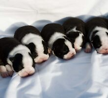 Puppies by Lisa Ouillette