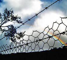 Barbwire Rainbow by Virginia Daniels