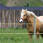 Palomino in the Pasture by Alyce Taylor