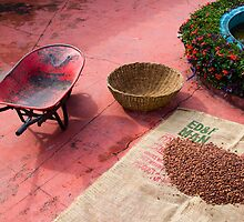 Drying Cacao Beans at a Chocolate Plantation by Zane Paxton