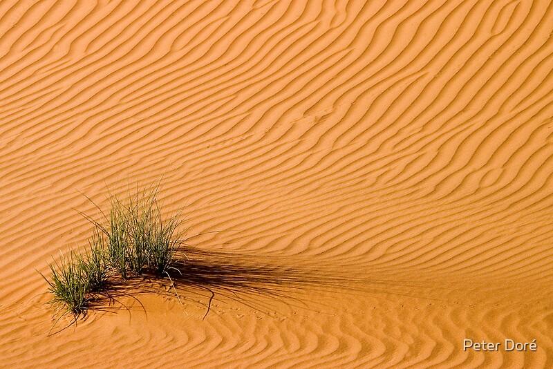 desert grass by peter dor redbubble. Black Bedroom Furniture Sets. Home Design Ideas
