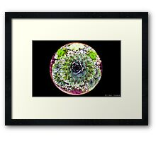 In the Round Framed Print