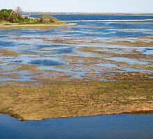 Cape Cod National Seashore by Dandelion Dilluvio