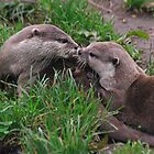 Otters by Kevin North