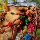 Camel by Naveen  Sharma