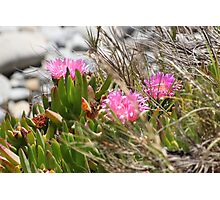 Pink Flowers on the Bluff Photographic Print