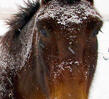 Snow Horse by pvsnyder