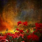 Phil&#x27;s Poppies by Jeff Burgess