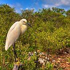 Snowy Egret by njordphoto