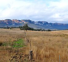 Don't Fence Me In - Capertee Valley NSW Australia by Bev Woodman