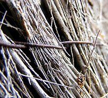 Fenced. by elizabethrose05