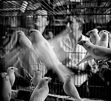 I Know Why the Caged Bird Sings by RONI PHOTOGRAPHY