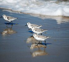 Follow the Leader by Sandy Woolard
