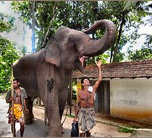 ELEPHANT AND HANDLER. by ronsaunders47