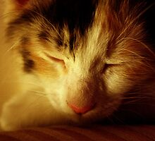 Let Sleeping Cats Lie by divya vijay pratheek