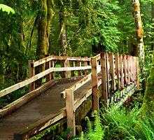 """""""A Forest Bridge"""" by Lynn Bawden"""