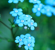 Forget Me Not by Sami Mick