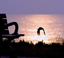 Robin's Early Morning Takeoff by Jessica Dzupina