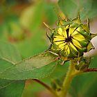 Summer Sunflower by DanAlford