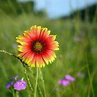 Highway Flower by DanAlford