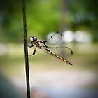 Bug Hunter by DanAlford