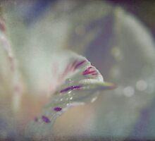 Delicate and Strong by Laurie Search