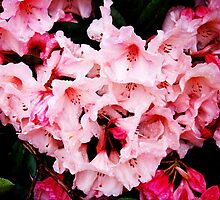 Pink Rhodie Jewels by SoftlyFalling