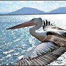 Pelican by Conor  O'Neill