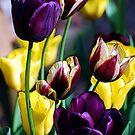 Tulip Fantasy by Mattie Bryant