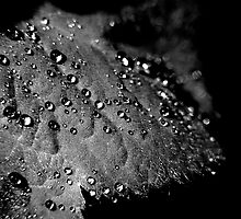 Water droplets on Leaf. ( B&W) by Karen  Betts