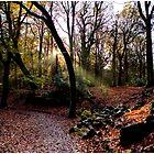 Autumn Light by hary60