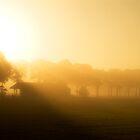 Misty Barn by Anteia