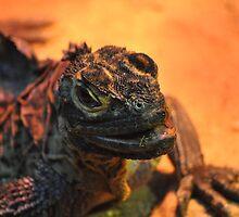 Philippine Sailfin Water Dragon (Hydrosaurus pustulatus) by sahoaction