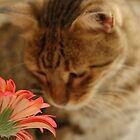 Tomasina cat with flower by Isabella Bullock