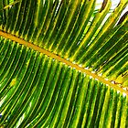 Palm Leaf - Cancun by Samantha Wong