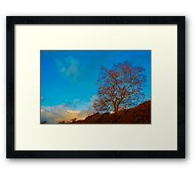 Solitary tree Framed Print