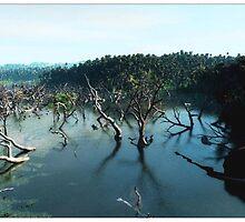 flooded mangroves by dshones