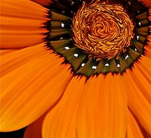 Twisty Orange Flower by ijam357