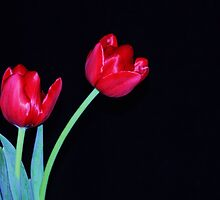 two red tulips by ANNABEL   S. ALENTON