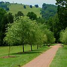 Monticello Hillside Path by RodriguezArts
